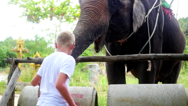 Children feeding the elephant bananas video