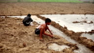 Children playing in cultivated land video