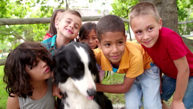 Children playing in the park with a Border Collie dog video