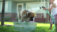 Children washing dog in front yard video