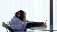 Chimp Cellphone video