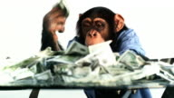 Chimp Money Excited video