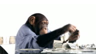 Chimp Money Saving video