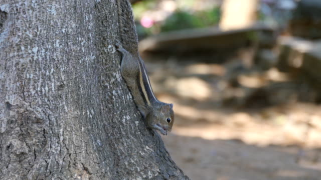 Chipmunk sitting on a tree trunk in the park eating seeds. Forest at background. Close up video
