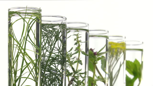 chives, dill, thyme, basil,  curry and mint in test tubes video