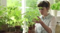 Choosing tomato plant video