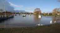 Christchurch Dorset England UK River Stour swans swimming video