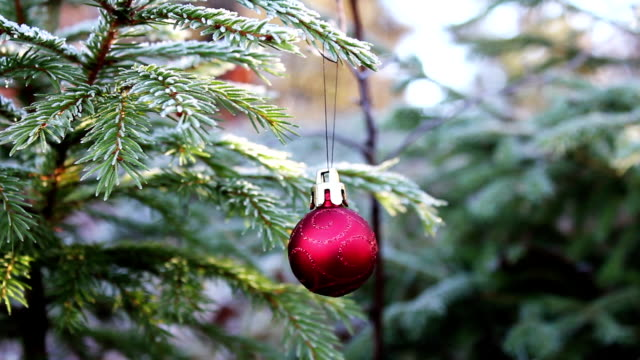 Christmas Bauble in Nature video