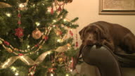 Christmas Dog video