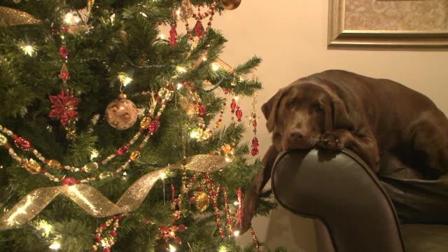 Christmas Dog video