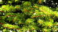 Christmas fir tree background. video