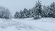 Christmas fir trees in snow wild forest winter snowing video