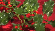 Christmas Holly video