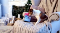 Christmas present box dog opening video