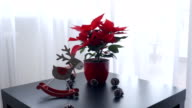Christmas toy and large red poinsettia on the table side view video