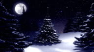 Christmas tree at night decorated by polar star. video