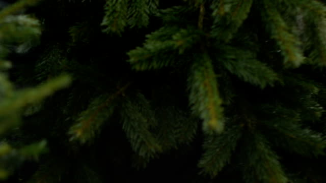 christmas tree packing video