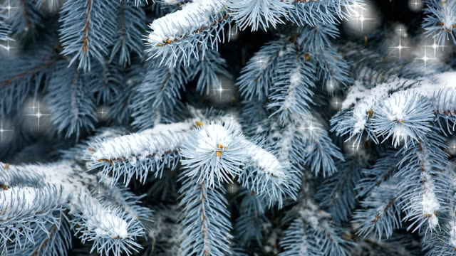 Christmas tree with twinkling falling stars video