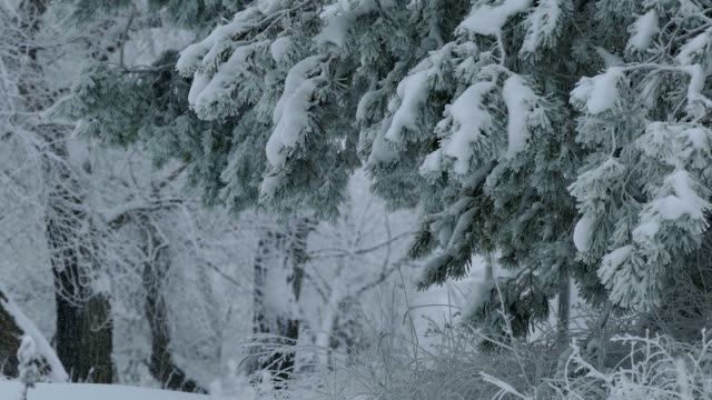 Christmas winter video