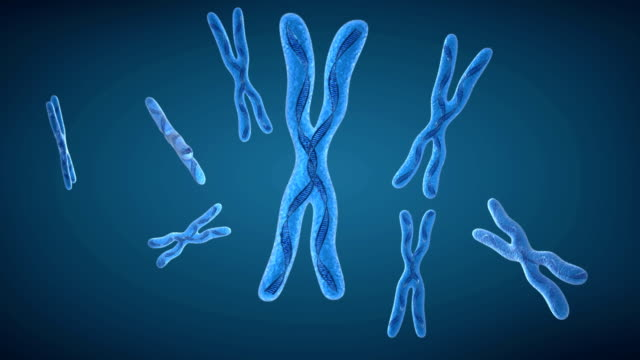 Chromosome x and DNA Strands video