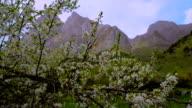 HD Cine Crane: video
