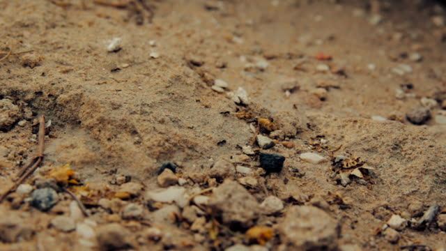 Cinemagraph of closeup shot of a group of black ants walking on dirt video