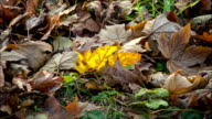cinemagraph of swinging yellow mapple leaf on the ground video