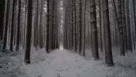 Cinematic shot walking down snowy trail through long line of symmetrical pines as fresh snow falls video