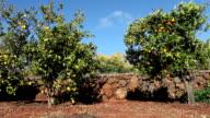 Citrus Garden video
