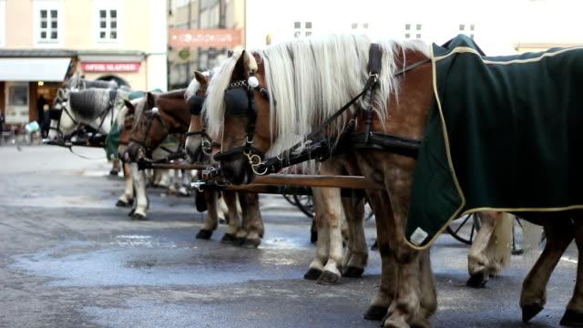 City horses video