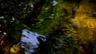 clean water video