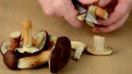 cleaning cepe and Bay Bolete mushroom (Boletus badius) video