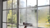 cleaning window with steam video