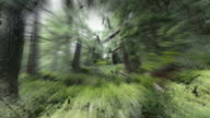 INFINITE ZOOM THROUGH MOUNTAIN FOREST, clear selective perception. video