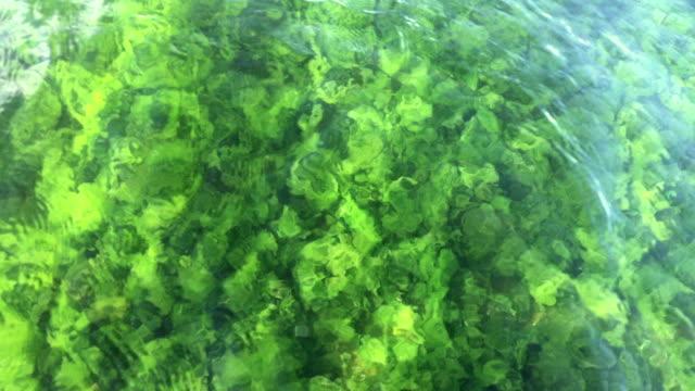 Clear underwater video