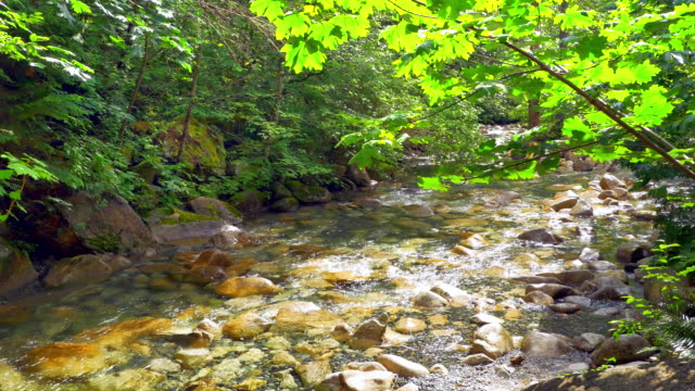 Clear Water and Smooth Stones, Gentle Stream in Forest Green Forest Landscape video