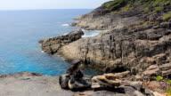 Cliff of Tachai Island video