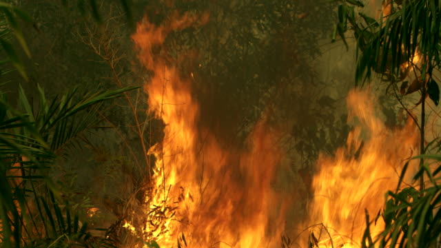 Climate change. Forest fire burning video Indonesia video