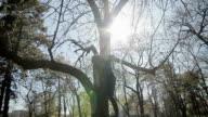 climbing a tree,camera stabilization shoot video