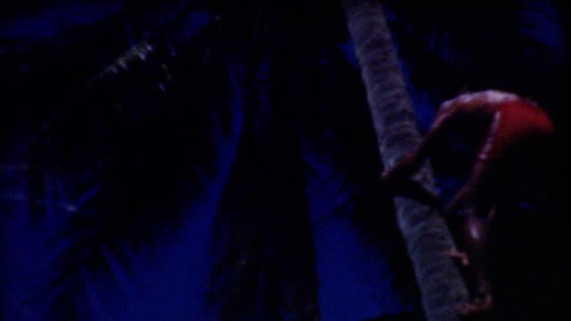 Climbing Tree In Hawaii 1930's. video
