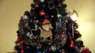 Close up Christmas Tree video