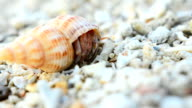 close up: colorful and big Hermit crab try to start video