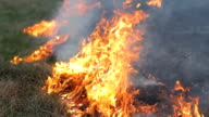 Close up fire burning dry grass. Line of fire, bright flame, smoke and ash. Careless handling, wildfire spreading video