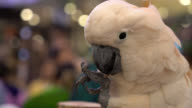 Close Up Macaw video