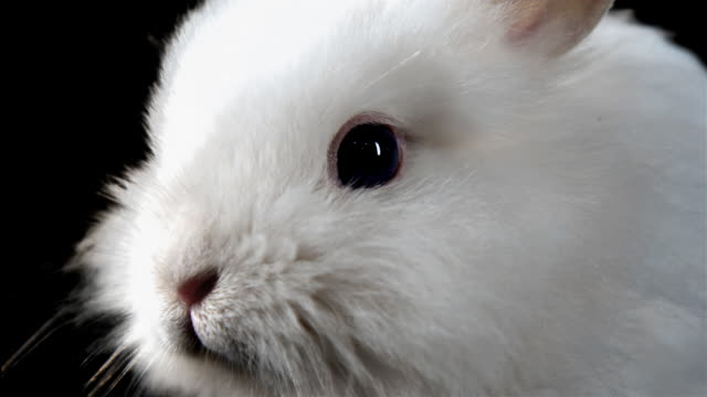 Close up of a bunny. video