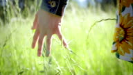 Close Up Of A Girl's Hand Feeling Tall Grass Between Her Fingers. Slow Motion. Lens Flare video