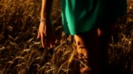 Close up of a girls hand playing in a grassy field at dusk, the golden hour. video