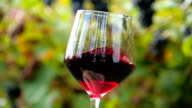 close up of a glass of red wine video
