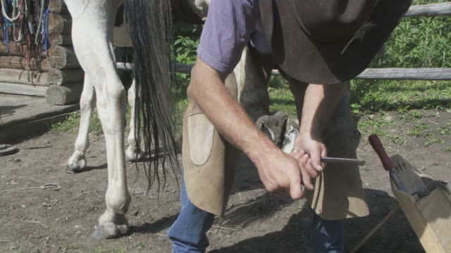 Close up of a horse being shoed video