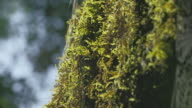 close up of a spider web in the forest, next to a mossy tree video